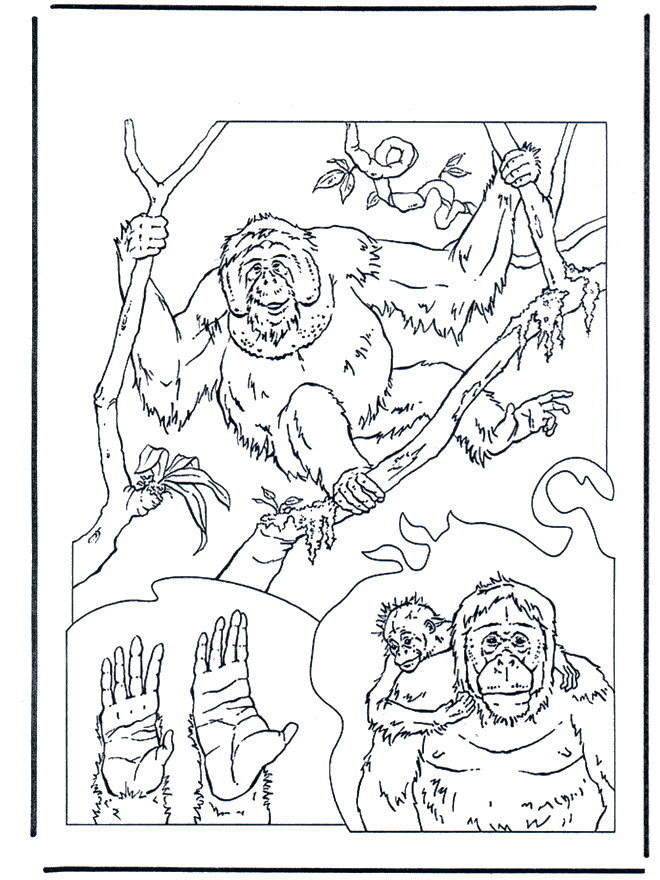 n 34 coloring pages of monkeys
