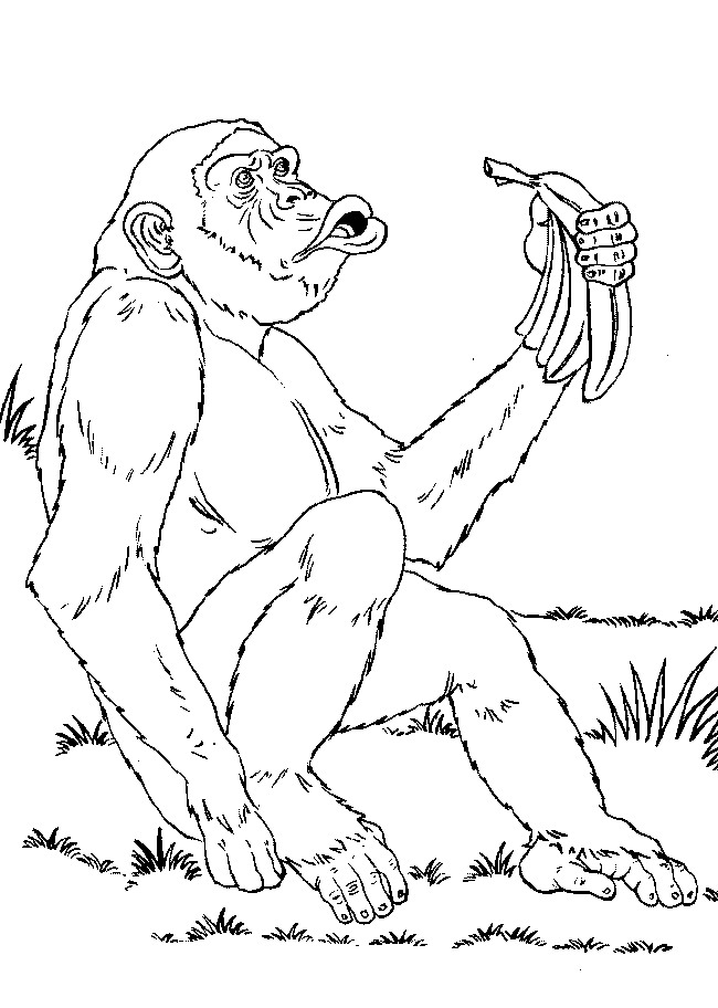 34 monkeys coloring pages