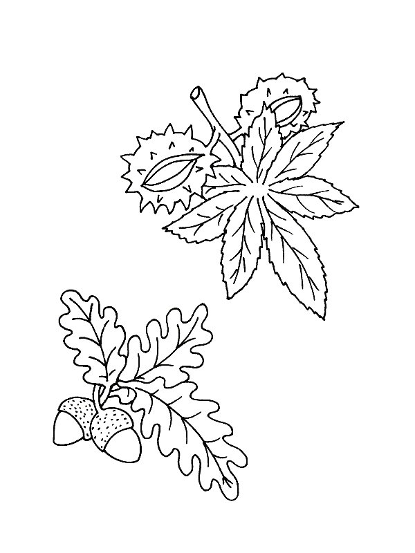 Kids-n-fun.com | 39 coloring pages of Leaves