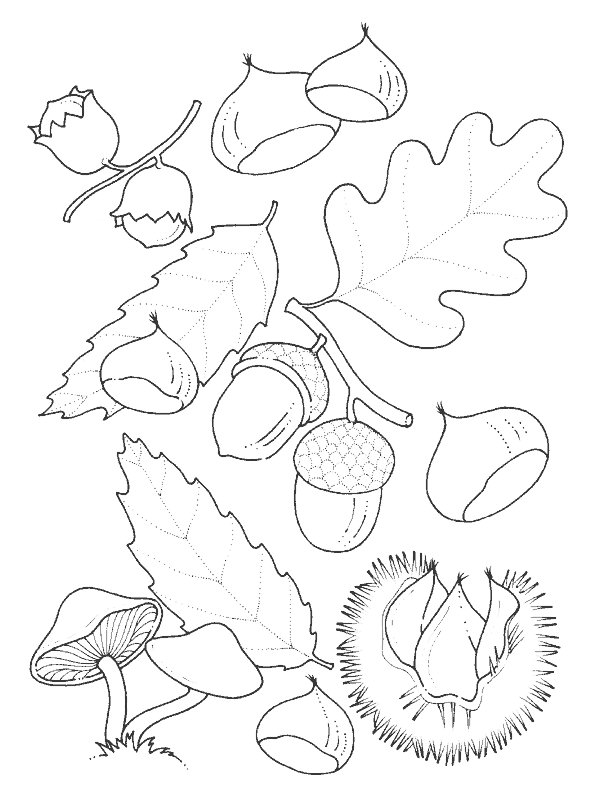 Kidsnfuncom  39 coloring pages of Leaves
