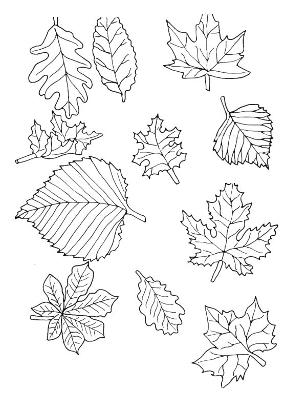 n 39 coloring pages of leaves