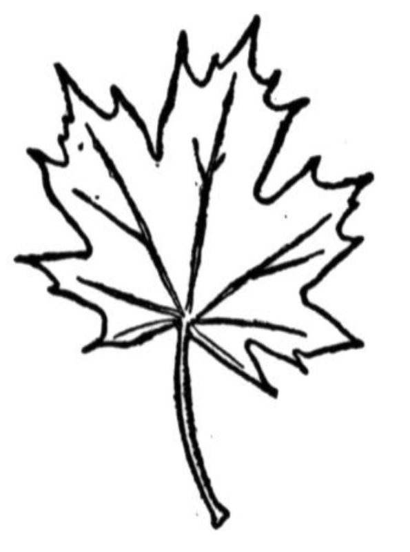 trees and leaves - Tree Leaves Coloring Page