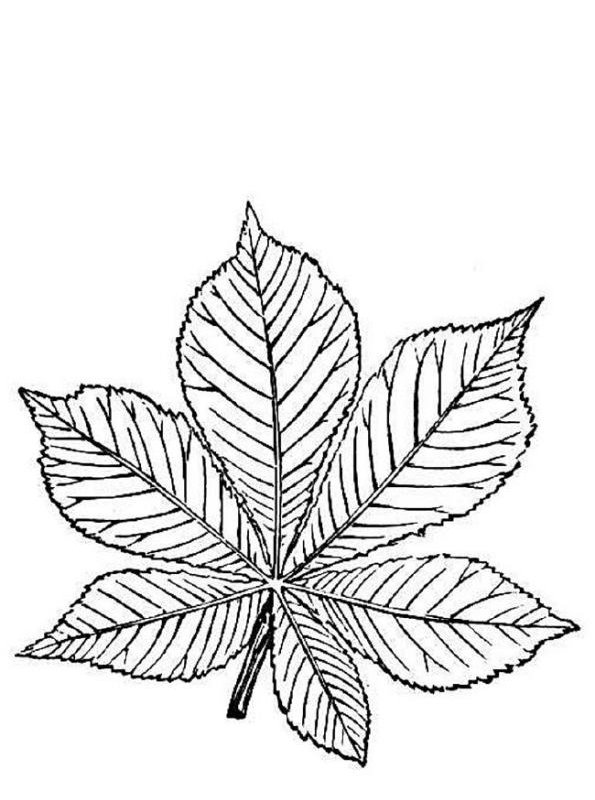 19 trees and leaves coloring pages - Tree Leaves Coloring Page