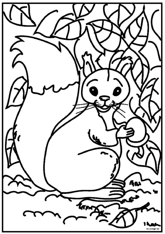 Kids-n-fun.com | 13 coloring pages of Squirrel