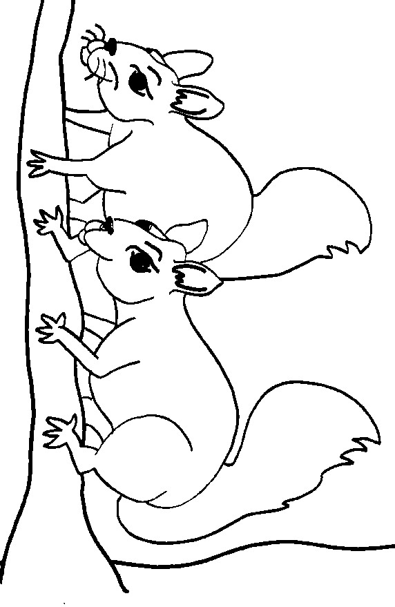 coloring pages of squirrels - photo#24