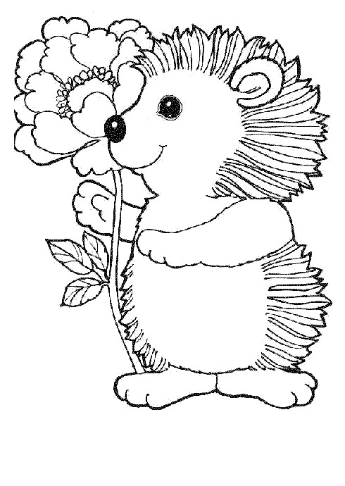 hedgehogs - Hedgehog Coloring Pages