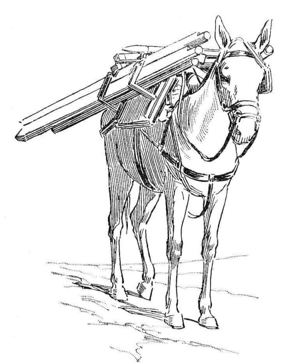kidsnfun  coloring page donkeys donkeys