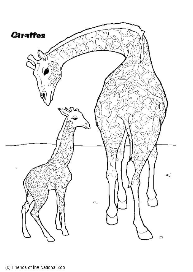 giraffe - Giraffes Coloring Pages