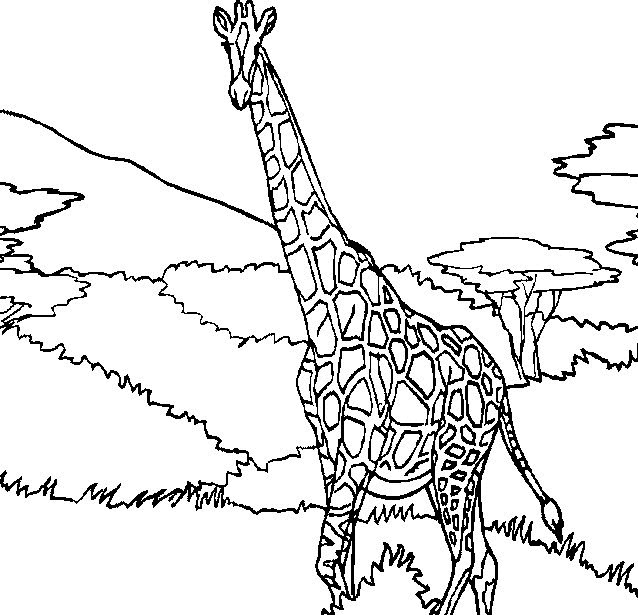 kids n funcouk 45 coloring pages of giraffe