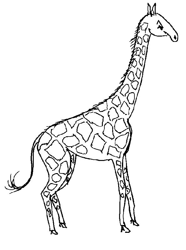 girraffe coloring pages - photo#27