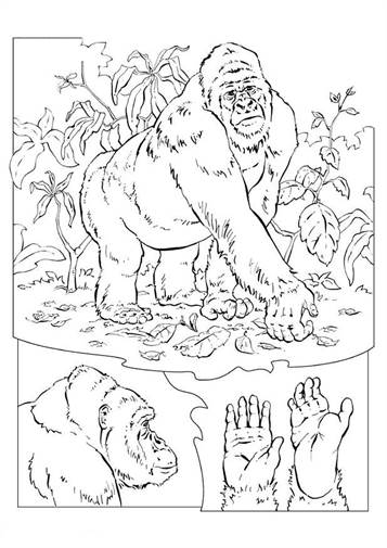Kids-n-fun.com | 7 coloring pages of Bokito the Gorilla