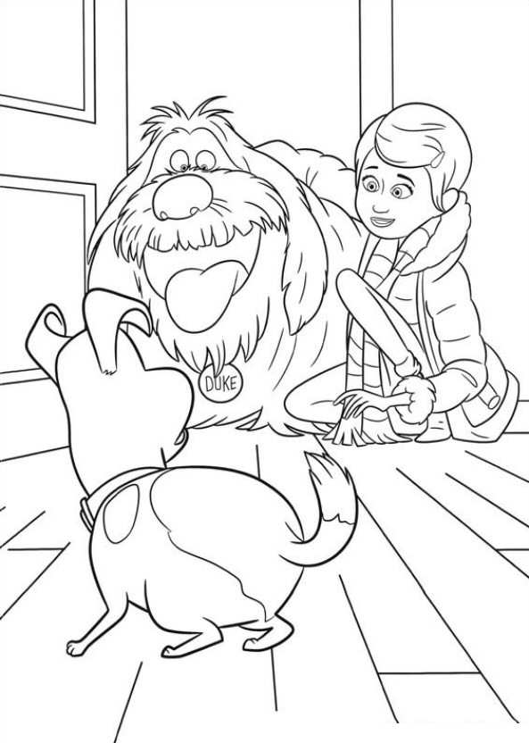 Kids-n-fun.com | 29 coloring pages of Secret Life of Pets