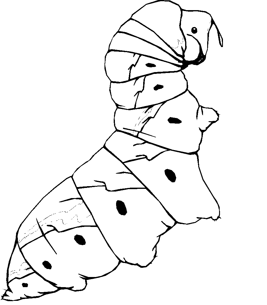 kids n fun com all coloring pages about animals