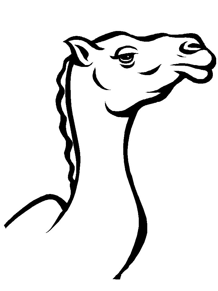 coloring pages camel face - photo#19