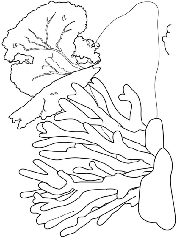 Kids-n-fun.com Coloring Page Coral Coral Reef 2