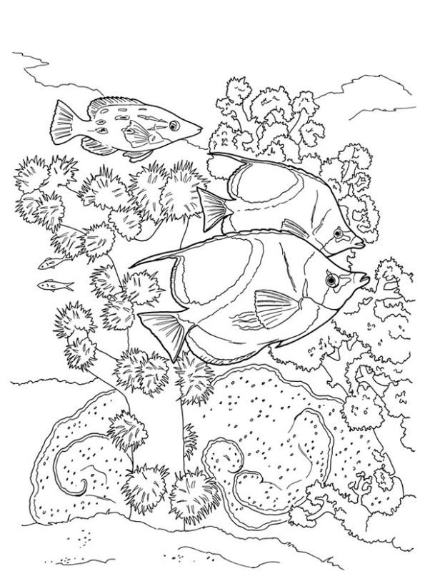 - Kids-n-fun.com Coloring Page Coral Coral Reef Fish
