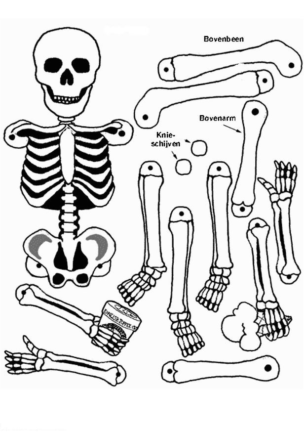 Kids n funcom 17 coloring pages of Human body