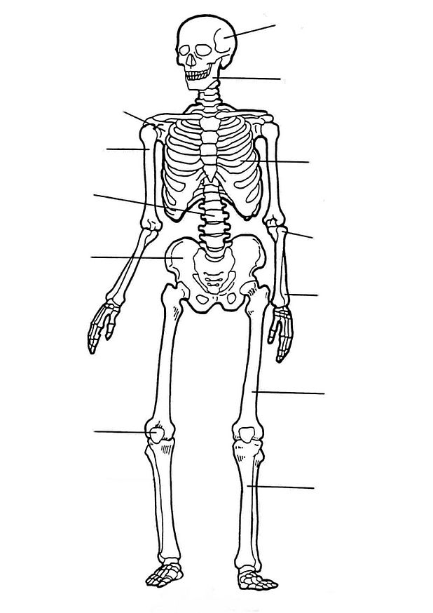 Kids-n-fun.com | 17 coloring pages of Human body