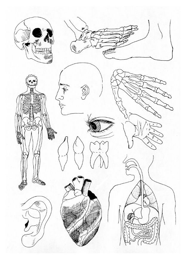 Kidsnfuncom  17 coloring pages of Human body