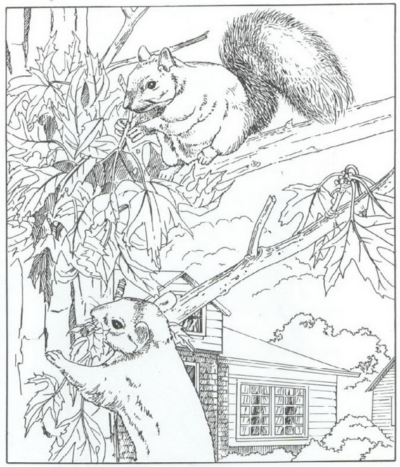 n 40 coloring pages of nature around the house