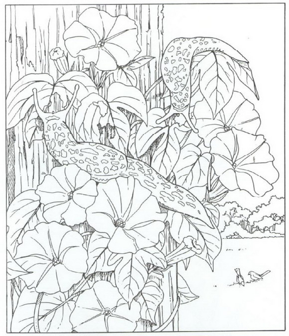 morning with images coloring pages nature coloring