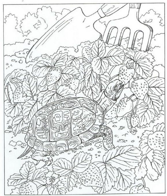 Kids N Fun Com Coloring Page Nature Around The House