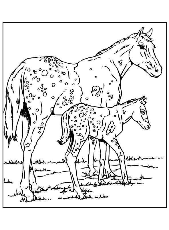 Kids N Fun Com 63 Coloring Pages Of Horses