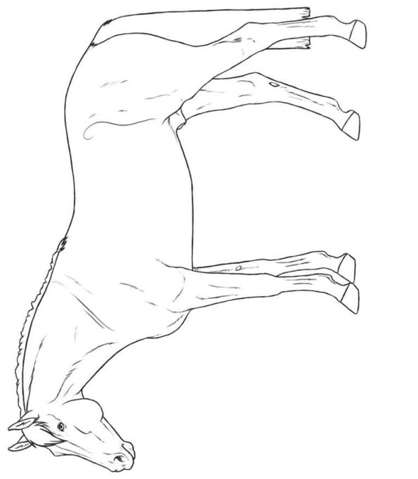 Kidsnfun 30 coloring pages of Horse breeds