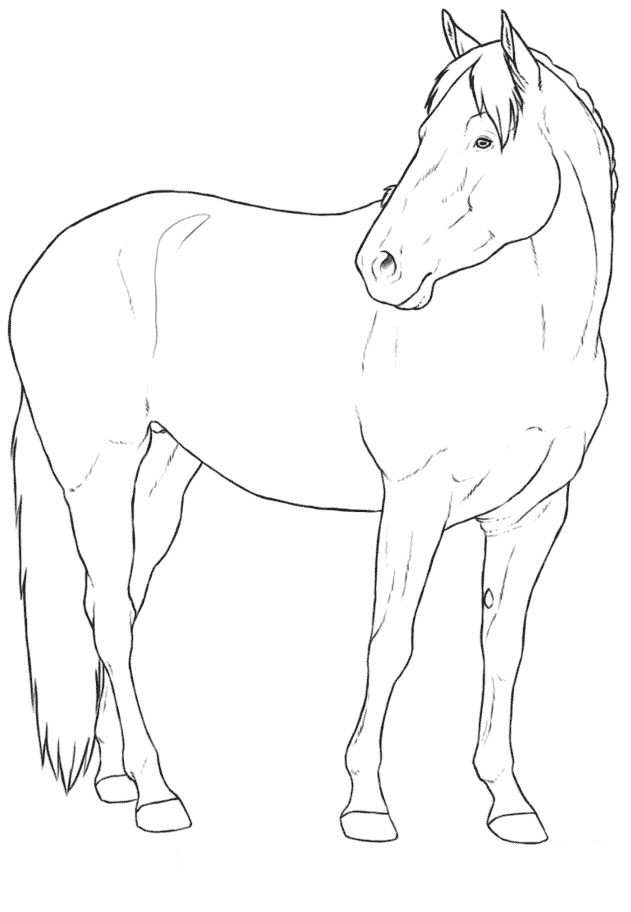 thoroughbred coloring pages - photo#31