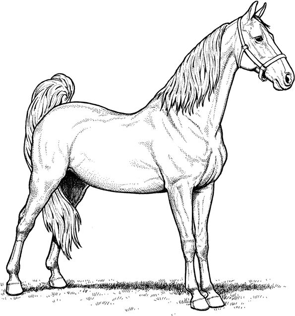 Kids-n-fun.com | 30 coloring pages of Horse breeds