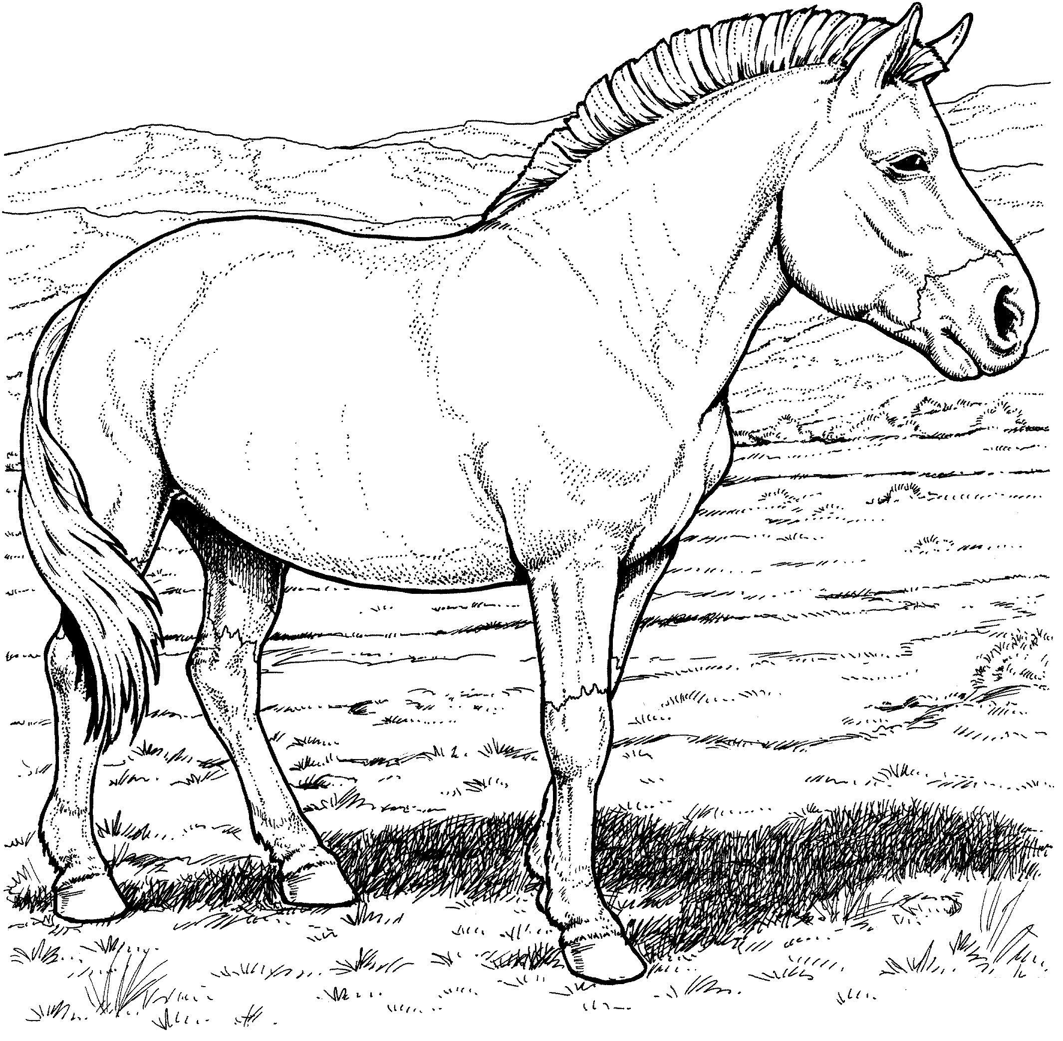 kids n fun co uk 30 coloring pages of horse breeds
