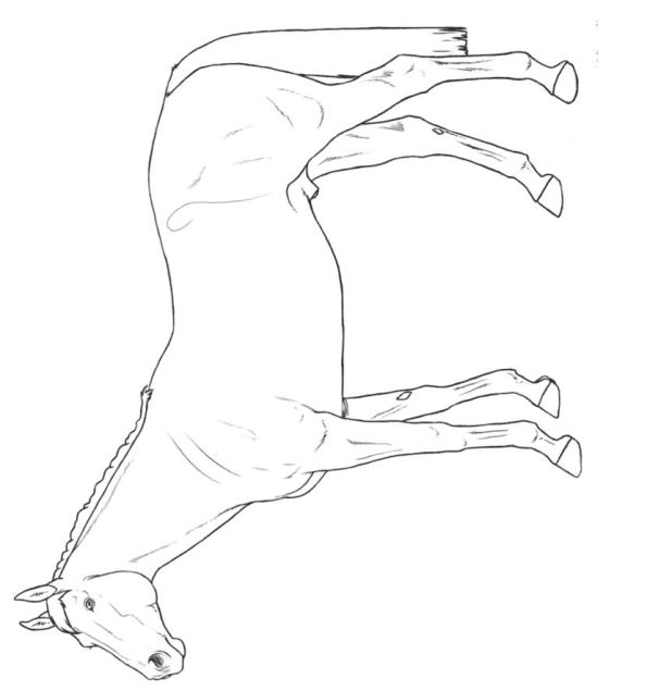 thoroughbred coloring pages - photo#11