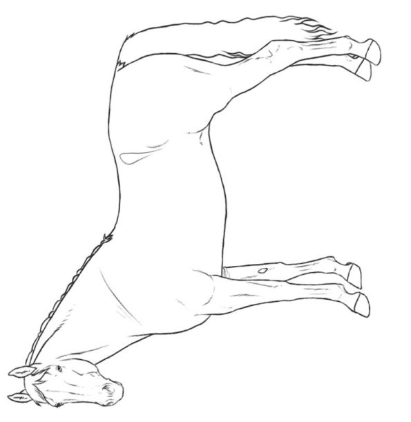 Kleurplaat Paarden Rassen Kids N Fun Com Make Personal Coloring Page Of Warmblood