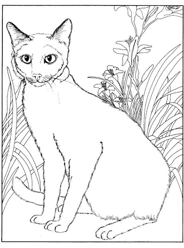 Kleurplaat Wilde Paarden Kids N Fun Com 68 Coloring Pages Of Cats And Dogs