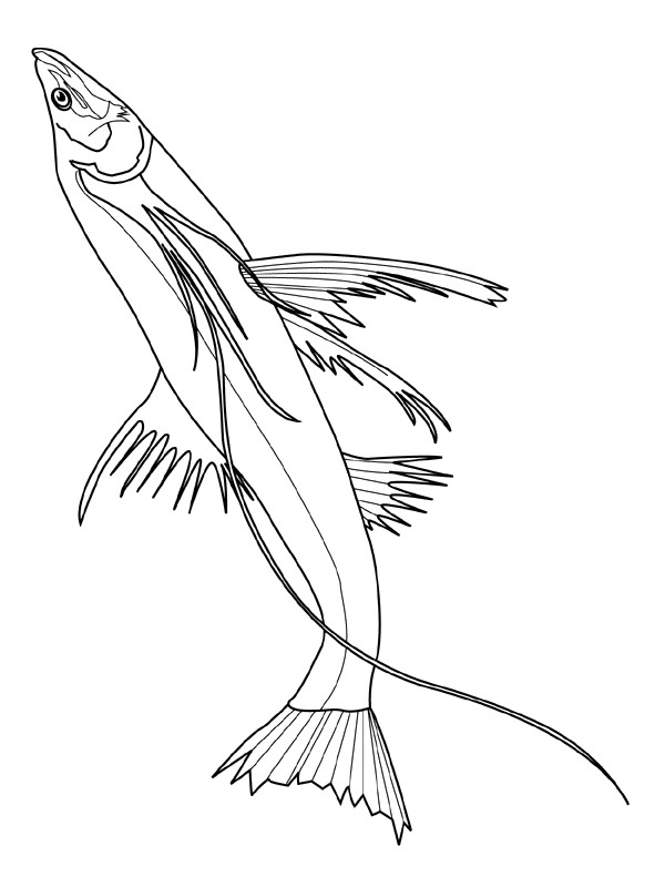 Kids-n-fun.com | 41 coloring pages of Fish
