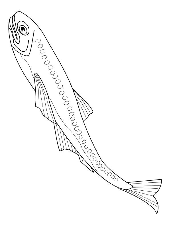 41 Fish Coloring Pages