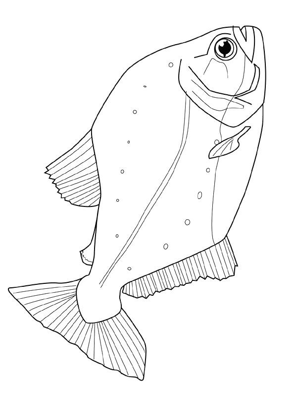Kids-n-fun.com | Coloring page Fish Fish