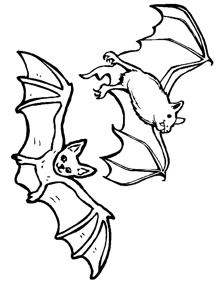 Kidsnfuncom  12 coloring pages of Bats