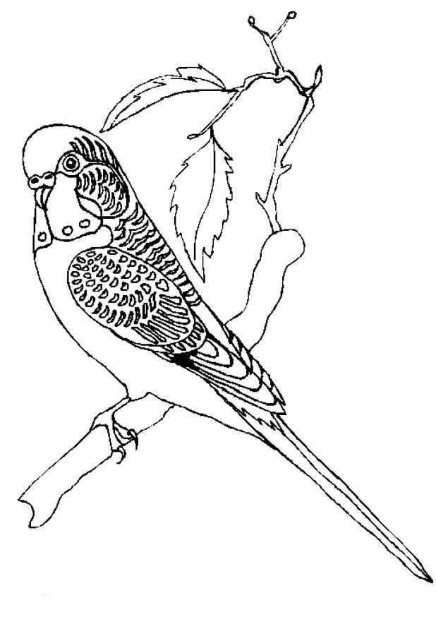 Kidsnfuncom  38 coloring pages of Birds