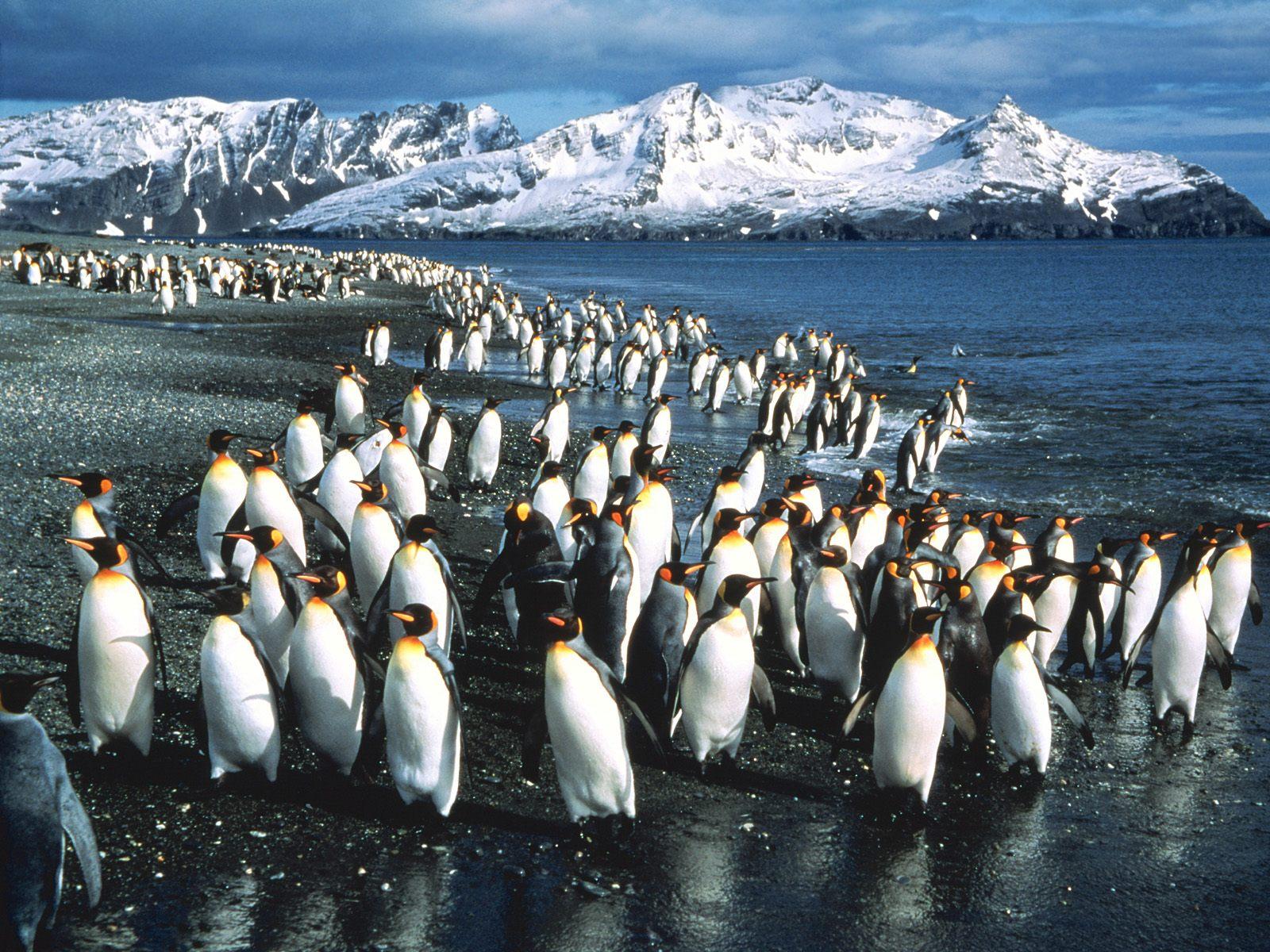 Kidsnfun Wallpaper Penguins Penguins