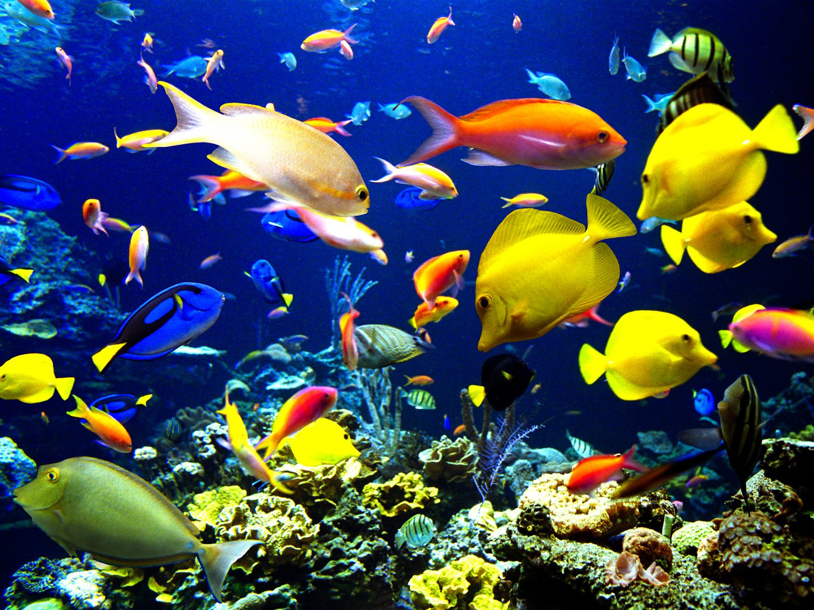 Fish Wallpapers 2 in addition William Cruz Bb155413 likewise Video Survey Assesses East Africas Coral Reef Fish together with What A Night also 7508480. on oscar flores flooring