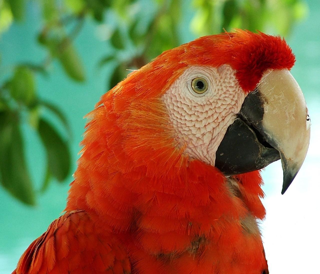 Kids N Fun Com Wallpaper Tropical Birds