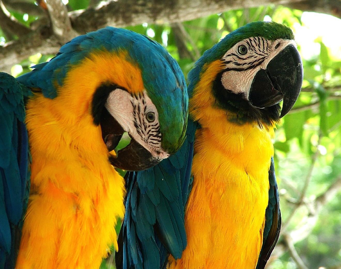 Kids-n-fun.com | Wallpaper Tropical birds Tropical birds