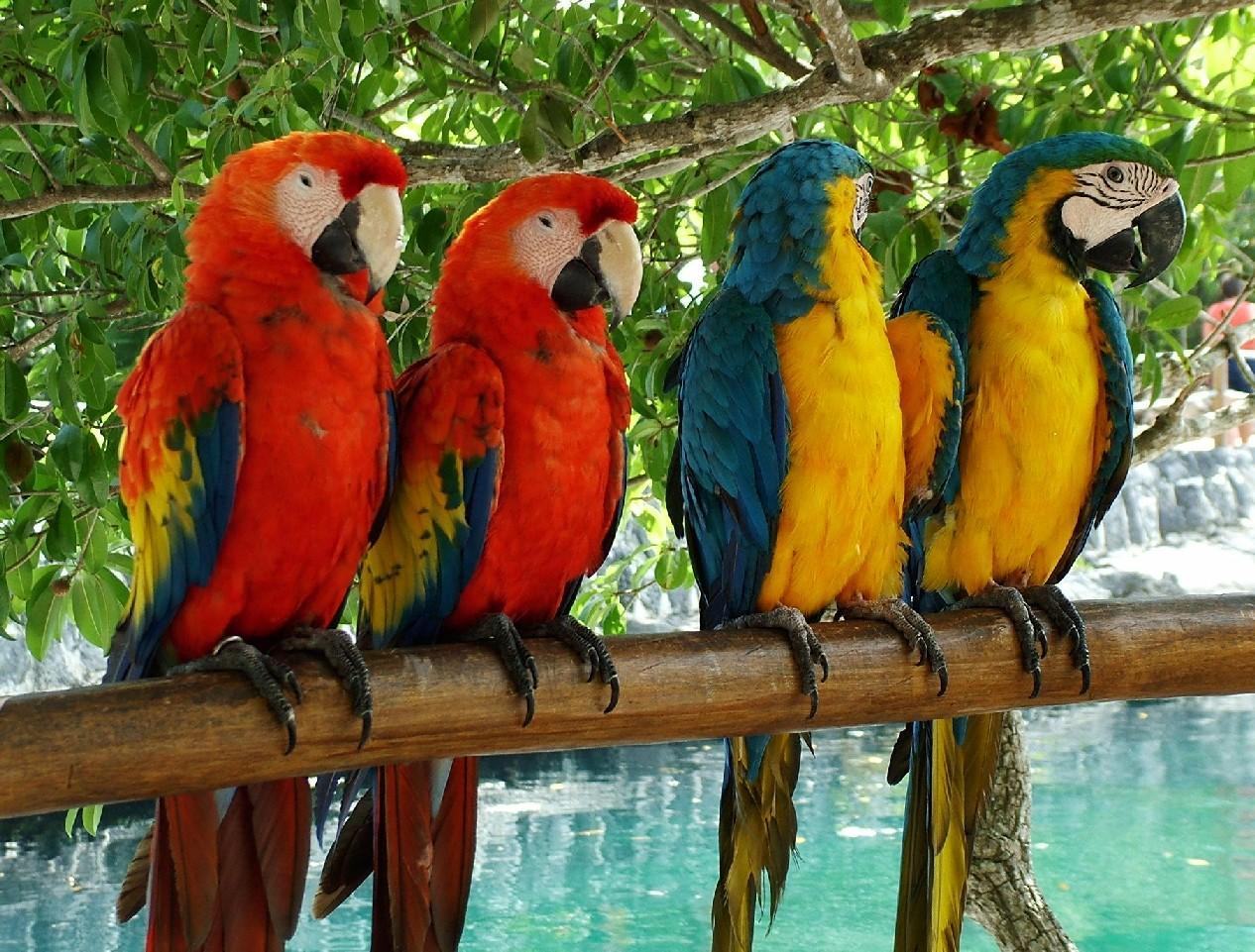 tropical bird wallpaper for walls - photo #19