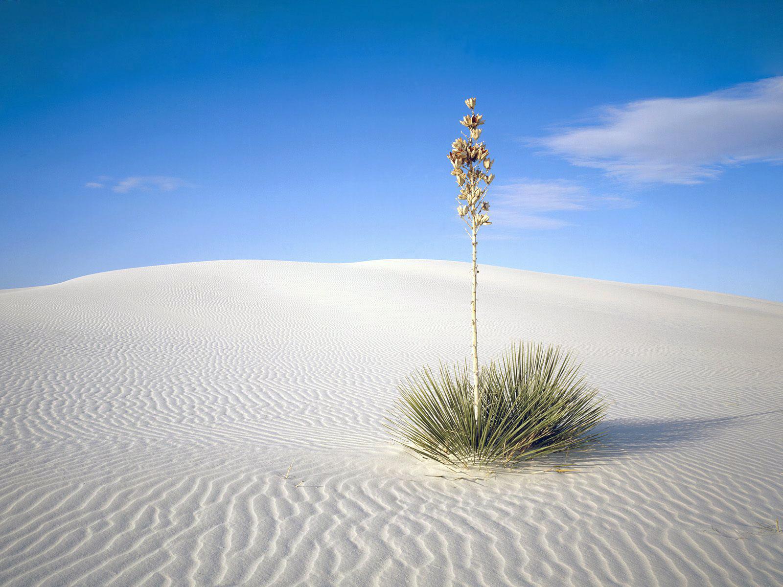survivor desert wallpapers - photo #27